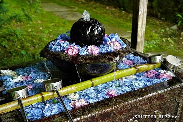 手水鉢を彩る花手水。ぎっしりと敷き詰められた紫陽花
