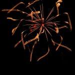 """夜空を縦横無尽に飛び回る""""蜂""""のような打ち上げ花火 – SONY α7 III(ILCE-7M3)撮影"""