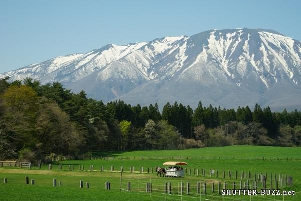 雪山を背景に、新緑の草原を歩く馬車