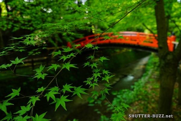 京都新緑、青紅葉