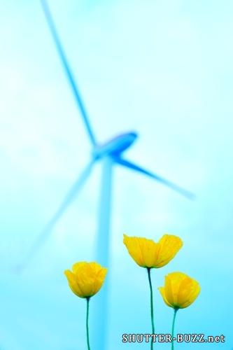 青い写真、黄色い花