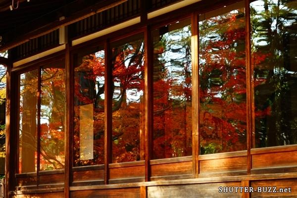 窓ガラスにリフレクションする真っ赤に燃ゆる紅葉窓ガラスにリフレクションする真っ赤に燃ゆる紅葉窓ガラスにリフレクションする真っ赤に燃ゆる紅葉窓ガラスにリフレクションする真っ赤に燃ゆる紅葉窓ガラスにリフレクションする真っ赤に燃ゆる紅葉