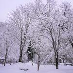 雪の公園 ‐ SONY α7 III(ILCE-7M3)撮影