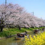 満開の桜並木と菜の花に囲まれて和舟が5隻連なる瞬間 – SONY α7 III(ILCE-7M3)撮影